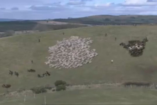 Extreme Sheep Led art